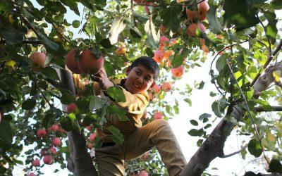 Plant frugttræer i haven til glæde for store og små