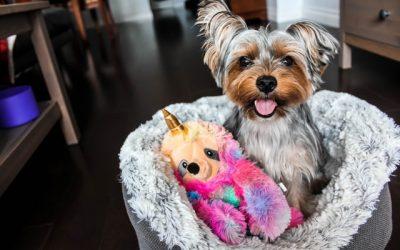 Bliv den perfekte hundeejer: sådan forkæler du din hund